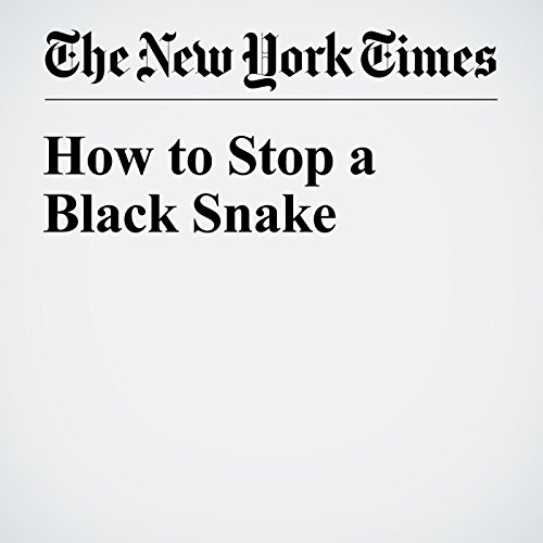How to Stop a Black Snake cover art