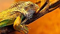 デジタル絵画 カラフルな - 油絵 数字キットによる絵画 塗り絵 手塗り DIY絵 デジタル油絵-動物30x40cm(diyの木製フレーム)