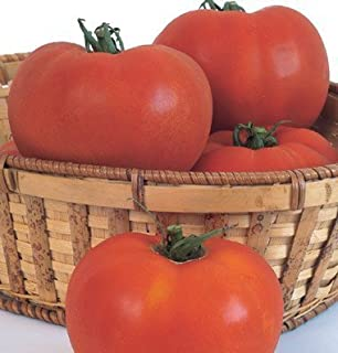 Best hybrid tomato seeds online Reviews