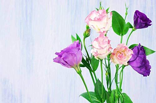 Lisianthus Samen 50Stk, Eustoma Blumensamen Pflanzen Mehrjährige Blütenpflanzen Balkon Topfblumenkerne (gemischte Lisianthus Samen)