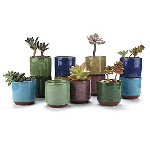 T4U 6.5CM Pots de Succulent en Céramique Crépiter Série Plante Succulente Cactus Pot de Fleur Jardinière Cultive 1 Paquet de 12 Cadeau pour Anniversaire Mariage