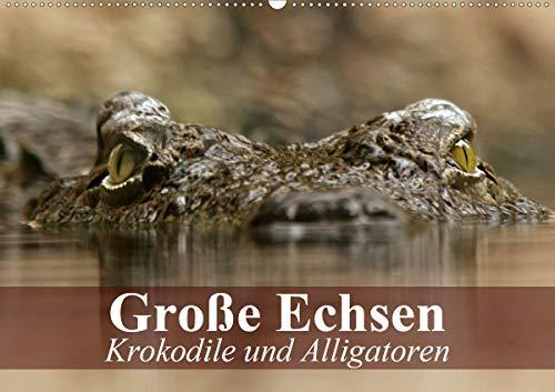 Große Echsen. Krokodile und Alligatoren (Wandkalender 2020 DIN A2 quer): Die letzten und furchteinflößenden Ur-Echsen unseres Planeten (Monatskalender, 14 Seiten ) (CALVENDO Tiere)