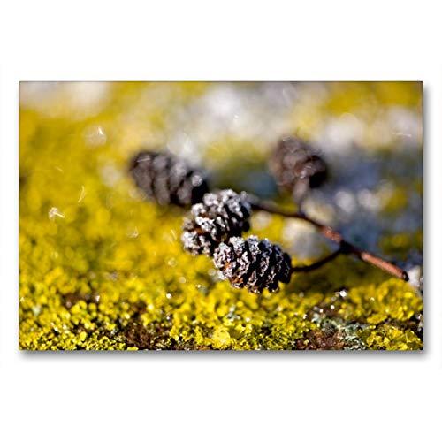CALVENDO Premium Textil-Leinwand 90 x 60 cm Quer-Format Eiskristalle an Zapfen und Flechten, Leinwanddruck von Bild-erzaehler