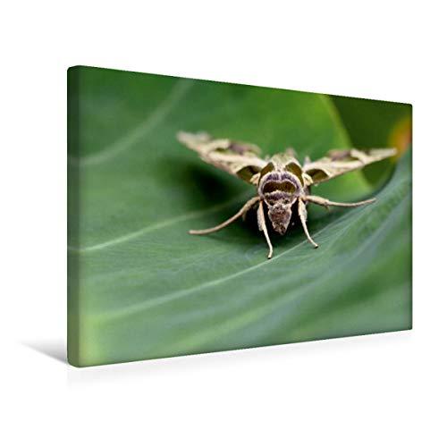 CALVENDO Premium Textil-Leinwand 45 cm x 30 cm quer, Oleanderschwärmer   Wandbild, Bild auf Keilrahmen, Fertigbild auf echter Leinwand, Leinwanddruck: Schmetterling Tiere Tiere