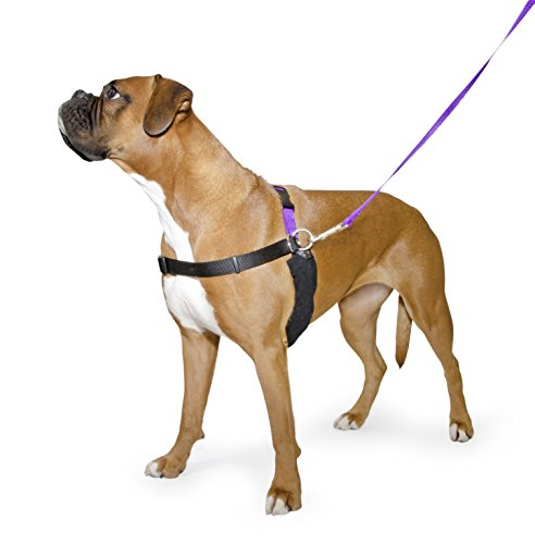 Ancol/Pure Dog Listeners - Stop Pulling Dog Training Harness & Lead Set - X-Large Size 8-9 (inc DVD)