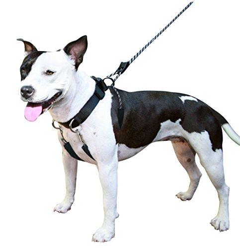 Sporn Dog Halter