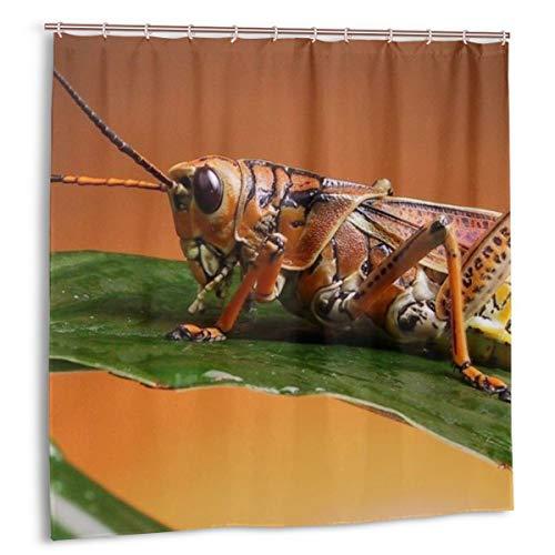 N/A Fashion Duschvorhang, wasserdicht, 152,4 x 182,9 cm, Tiere Insekten Grashüpfer