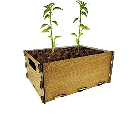 PLANTAWA Kit de Siembra para Pimientos, Kit de Cultivo para Huerto Urbano, Kit Autocultivo Interior para Casa, Kit Cultivo de Pimientos