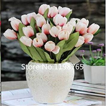 100pcs / sac 25 variétés de pétales de tulipes tulipe graines en pot des plantes en pot intérieur et extérieur purifient l'air de mélange des couleurs
