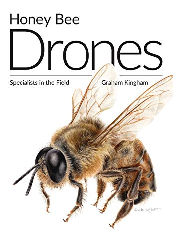 Honey Bee Drones: Specialists in the Field