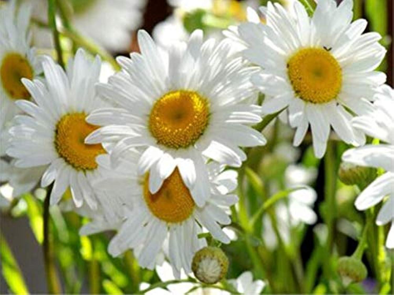 servicio considerado Diamante Pintura Completa Circular Flor Flor Flor blancoa Bordado De Diamante Punto De Cruz árbol Diamante Paisaje Piedras De Resina Taladro 60  80 Cm  Envío y cambio gratis.