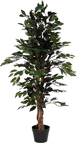 Ficus Verde - Árbol artificial De Los Muebles Con El Tronco Natural - Altas 150 cm Largo 55 cm