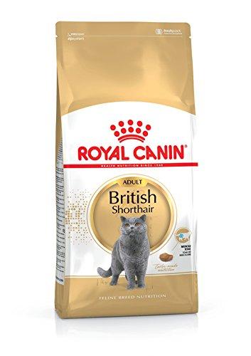 Royal Cani Canin British Shorthair Adult für robuste und kräftige Körperbau Katze 400g