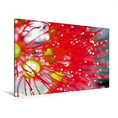Premium Textil-Leinwand 120 x 80 cm Quer-Format Starrer Zylinderputzer (Callistemon) | Wandbild, HD-Bild auf Keilrahmen, Fertigbild auf hochwertigem Vlies, Leinwanddruck von Karsten Schulze