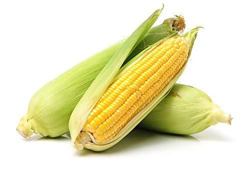 Golden X Bantom Corn Seeds, 50 Heirloom Seeds Per Packet, Non GMO Seeds, Botanical Name: Zea mays, Isla