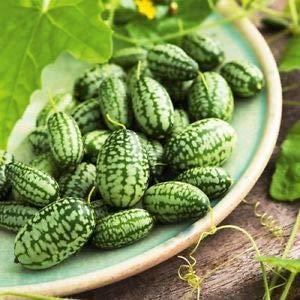 Yukio Samenhaus - 5pcs Rarität Mexikanische Minigurke Snack-Gurke Ziergurke Kletterpflanzen, exotische Minigurke Gemüsesamen winterhart mehrjährig für Salate oder zum Einlegen