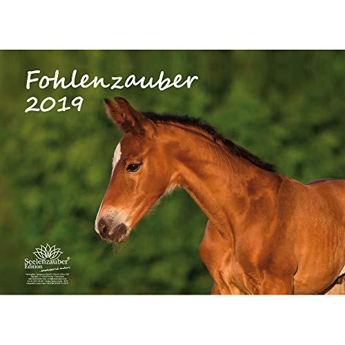 Fohlenzauber · DIN A3 · Premium kalender 2019 · paarden · paarden · paarden · veulen · Hengst · Stute · Cadeauset met 1 wenskaart en 1 kerstkaart · Edition Zelmagie