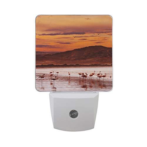 AOTISO Flamingo op Sunset Beach Atlantische kust Mountain Bird Auto Sensor Nachtlampje Plug in Indoor