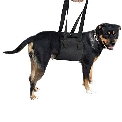 PetDream 犬が吊り上げて、犬の首を吊る。 (L, 黒い)