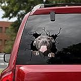 JZLMF Tear-Grey Cute Dog provocativo con Lengua afuera, Pegatina para el Cuerpo, Pegatina para Ventana, Reflectante