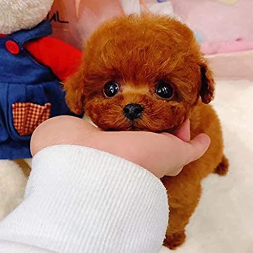 Webla Peluches para perros pequeños, perro de peluche, simulación de perro, cachorro, juguete de peluche, muñeco de animales de peluche(D)