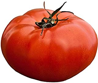 RDR Seeds 50 Giant 7 lb Delicious Tomato Seeds
