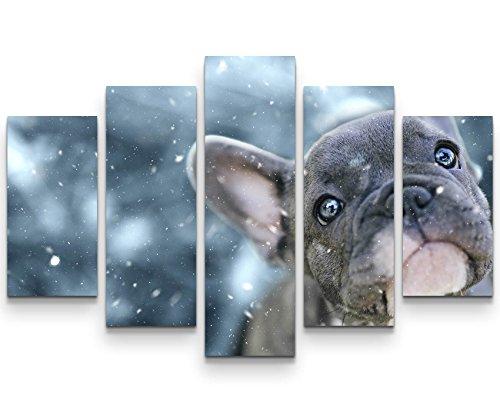 Paul Sinus Art Leinwandbilder   Bilder Leinwand 160x100cm Französische Bulldogge Welpe