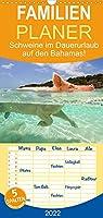 """Schweine im Dauerurlaub auf den Bahamas! - Familienplaner hoch (Wandkalender 2022 , 21 cm x 45 cm, hoch): Schwimmende Schweine auf den Exumas auf der Insel """"Big Major Cay! (Monatskalender, 14 Seiten )"""
