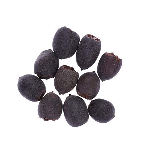 10 Piezas tazón Semillas de Loto jardín Plantas de jardín Lirio Flor tazón Estanque Semillas de bonsái (Flores de Loto Gemelos en un Tallo)