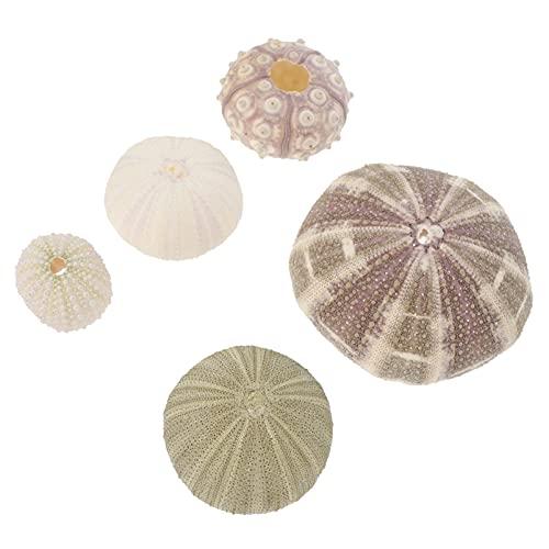 ABOOFAN 5 Piezas de Erizos de Mar Ornamento Náuticos Conchas de Playa Encantos Jarrón Relleno Boda Fiesta Acuario Pecera Paisaje Decoración