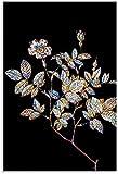 APAZSH Laminas para Cuadros Prismatic Rose MosaicⅡ Póster de Arte en Lienzo y Poster de Decoracion con impresión de Cuadros artísticas de Pared 60x90cm x1 Sin Marco