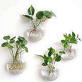 Terrarios colgantes, maceta de flores montada en la pared, macetas de burbujas de pared, soporte para plantas de aire, contenedor de plantas...
