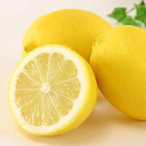 愛媛県中島産 希望の島 無農薬レモン 2kg
