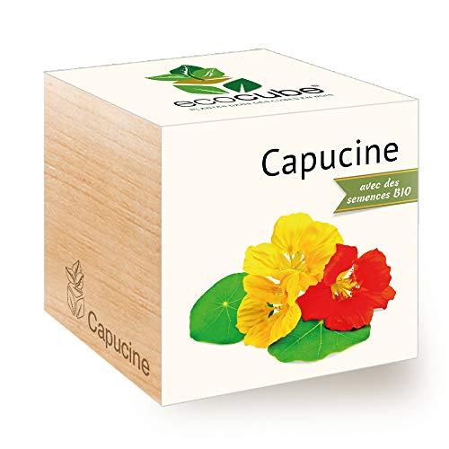 Feel Green Ecocube Capucine Certifiées Bio, Idée Cadeau (100% Ecologique), Grow-Your-Own/Kit Prêt-à-Pousser, Plantes Dans Des Cubes En Bois 7.5cm, Produit En Autriche