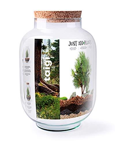 Jodeco Glas DIY Flaschengarten XXXL Just Add Plants Taigi Biosphere Set Pflanzenterrarium Mit Korkdeckel Höhe 34 cm Ø 24 cm Mini Garten Glas-Pflanzen-Terrarium