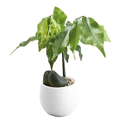 Oyfel Pot de Fleur Vase Succulente Cactus Plastique Rond Absorption Automatique d'eau pour Balcon Jardin 1 Pcs