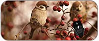 XXLプロフェッショナルラージマウスパッドBird Sparrow Wildlife Berry Extended Gamingマウスパッド