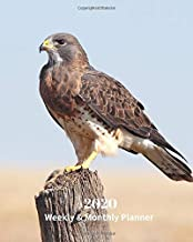 2020 Weekly and Monthly Planner: Hawk - Monthly Calendar with U.S./UK/ Canadian/Christian/Jewish/Muslim Holidays– Calendar in Review/Notes 8 x 10 in.-Wildlife Birds Nature