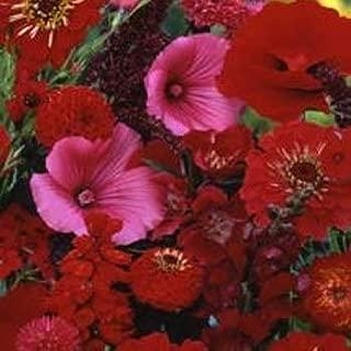 red hot poker flower seeds