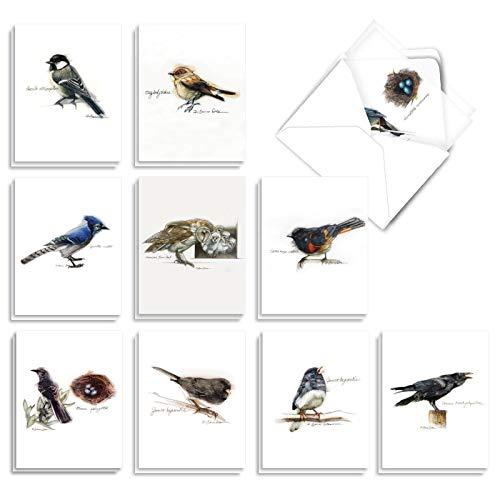 The Best Card Company - 20 Bulk Greeting Notecard Set Blank (4 x 5.12 Inch) (10 Designs, 2 Each) - Birds Watching AM3199OCB-B2x10