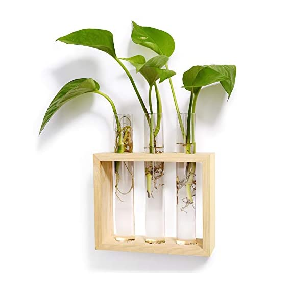 Mkono Wall Hanging Glass Planter Propagation Station Modern Flower Bud Vase in Wood Stand Rack Tabletop Terrarium for… 1 Great propagators: Prefect for propagations and cuttings! Propagates your plant's babies in style, slim glass container provides plenty of room for plant's roots and all are visible for observing its growth condition. Minimalistic Look: A wood rack in Natural Retro Color combined with 3 clear glass tubes. A beautiful way to display the artificial or freshly cut flowers, mixed bouquets and water rooted plants for home decor in livingroom, bedroom, restroom, dinning room, kitchen, or office. Functional Item: Simple look is suitable for most of plants, likes Scindapsus, Pothos vine, African violets, Lucky Bamboo, even for Herbs. Wall mountable or desktop stand for different ways of showing. Make a great gift for the plant-lover in your life.