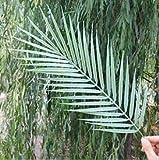 LHZUS Artificial único de Hoja de Palma Plant Simulation plástico Palmera Planta Verde Rama for el arreglo Floral Domingo de Ramos (Color : Verde, Size : One Size)