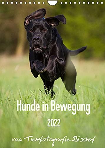Hunde in Bewegung 2022 von Tierfotografie Bischof (Wandkalender 2022 DIN A4 hoch)