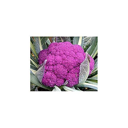 Violette Blumenkohl - Violetta di Sicilia - Kohl - Broccoli - Brokkoli - 100 Samen