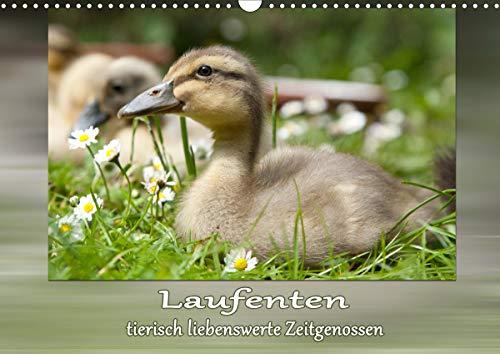 Laufenten - tierisch liebenswerte Zeitgenossen (Wandkalender 2021 DIN A3 quer)
