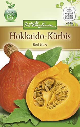 Chrestensen Hokkaido-Kürbis 'Red Kuri'