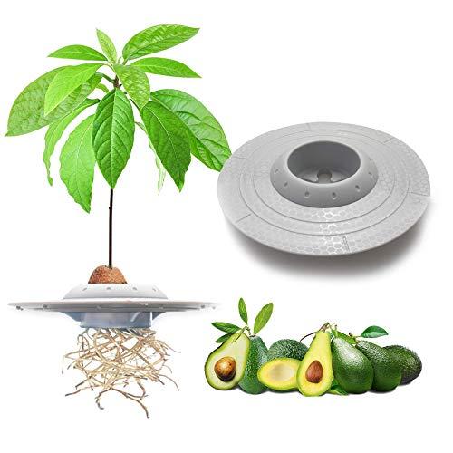 tEEZErshop tazón de plantación de semillas de aguacate, los mejores regalos de jardín para los niños de la,planta tu propio árbol de aguacate (semillas y contenedor transparente NO incluidos)