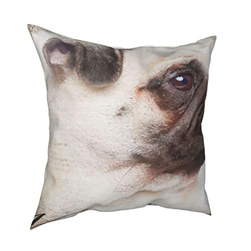 iksrgfvb Pillow Case Cushion Covers Vintage Newspaper Pug Square Pillowcases for Living Room Sofa 18 x 18 inch