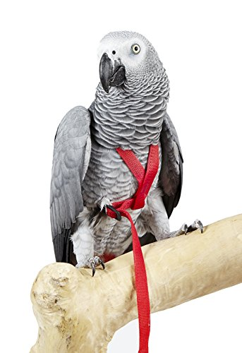 HappyBird ® | Fluggeschirr Adventure Bird Harness X-SMALL