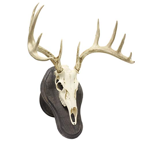 Walnut Hollow Country Rustic Deluxe Euro Display Trophy Mount Kit, Gray